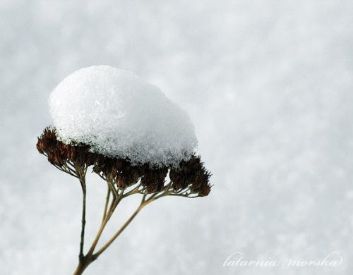 zimowa czapeczka