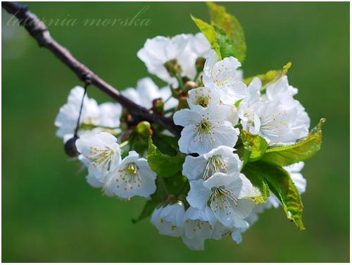 in-bloom-2