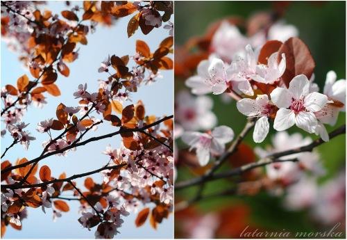 in-bloom-3