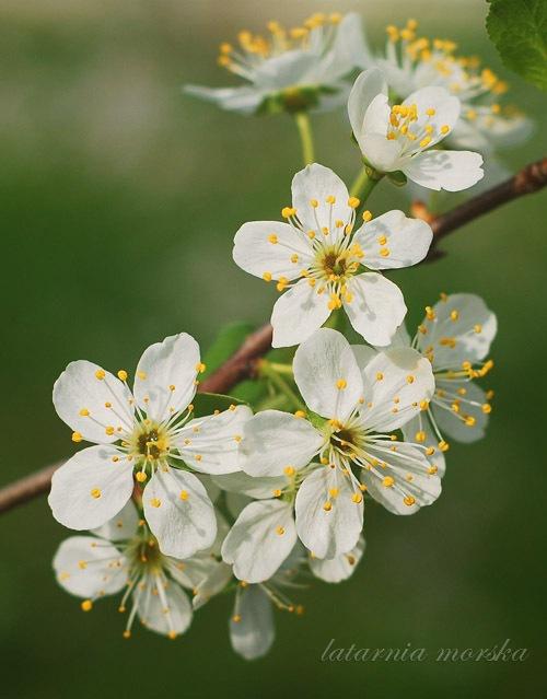 IVkwiaty-