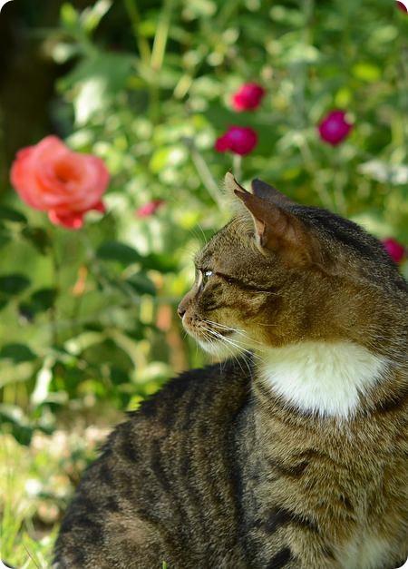Toffik w ogrodzie