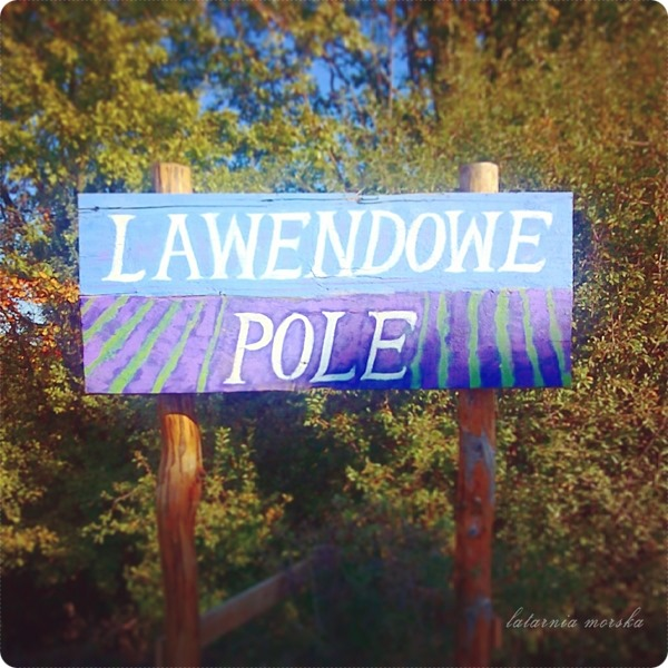 Wiejskie_warsztaty_alchemiczne_Lawendowe_Pole_28