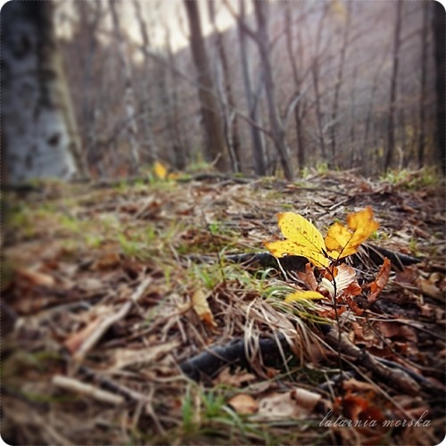 woods_11_11_201412_