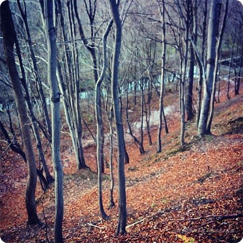 woods_11_11_20141_