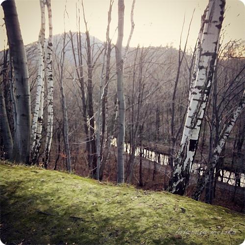 woods_11_11_20142_