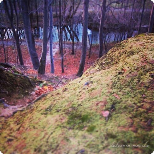 woods_11_11_20143_