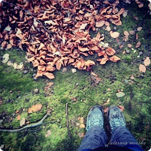 woods_11_11_20144_