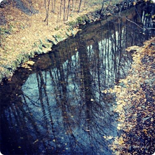 woods_11_11_20145_