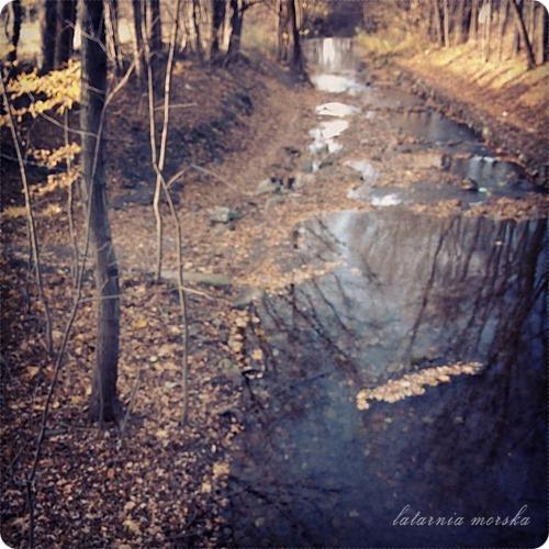 woods_11_11_20146_