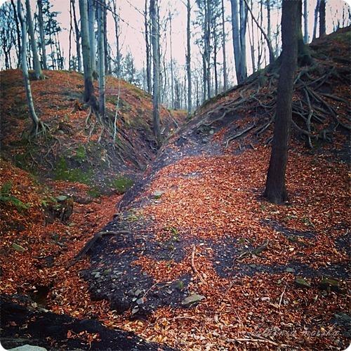 woods_11_11_20148_
