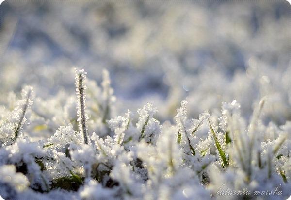 lodowe_kwiaty_1
