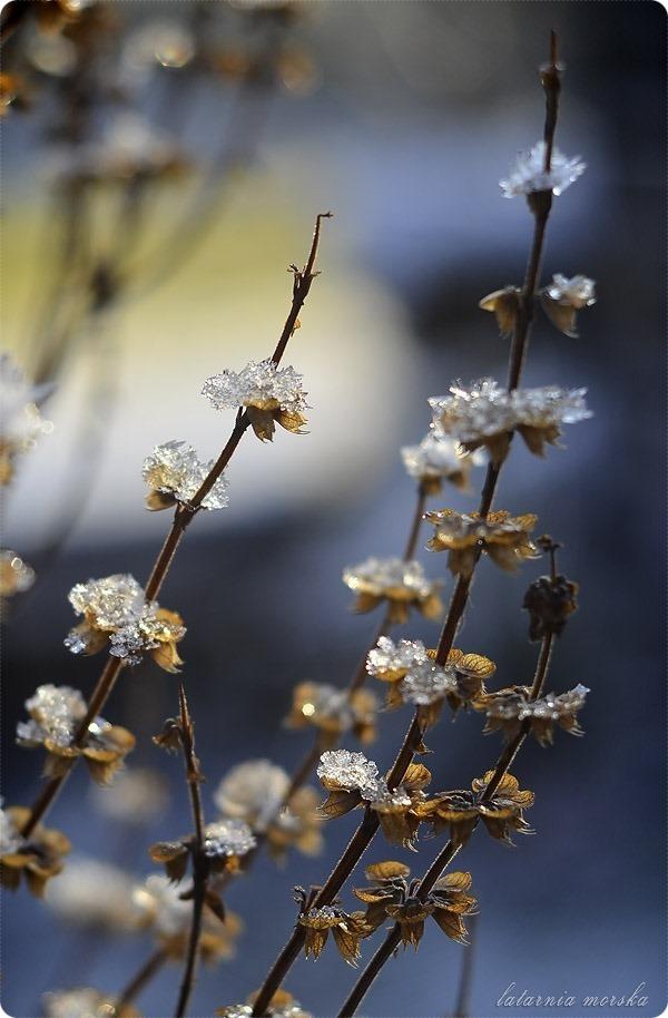 lodowe_kwiaty_2