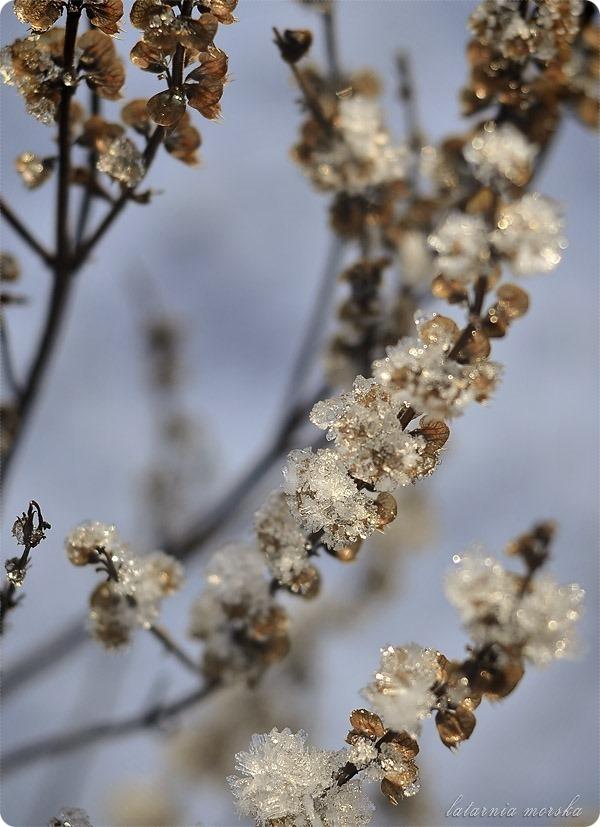 lodowe_kwiaty_3