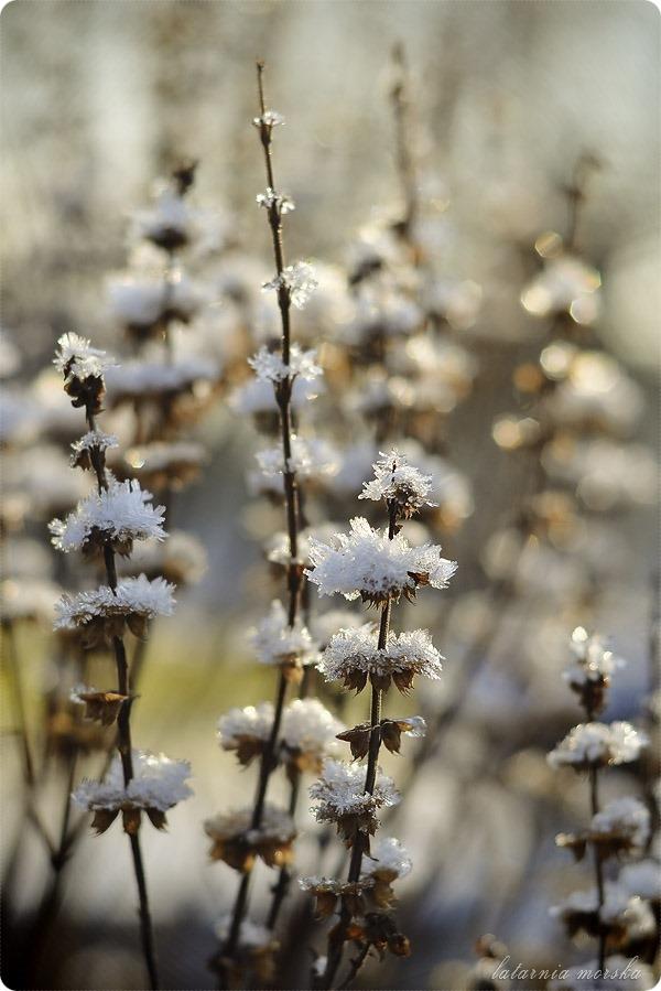 lodowe_kwiaty_4