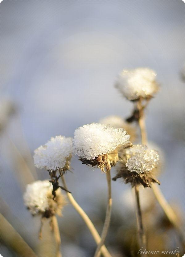 lodowe_kwiaty_5